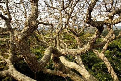 Il était une forêt - Photo 3