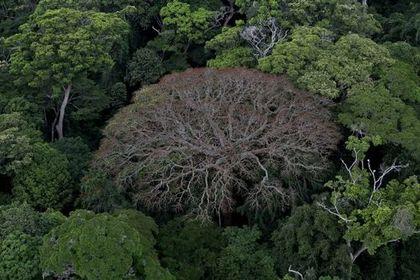 Il était une forêt - Photo 5