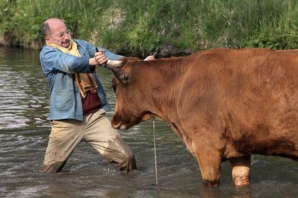 La vache - Photo 2