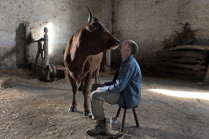 La vache - Photo 3
