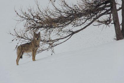 La vallée des loups - Photo 2