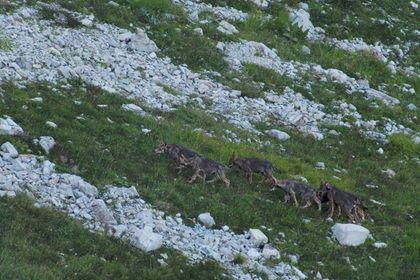 La vallée des loups - Photo 4