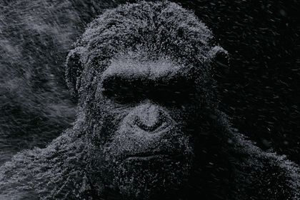 War for the Planet of the Apes - Foto 4