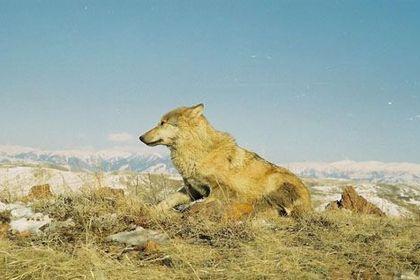 The Hunter (Anshi) - Foto 2
