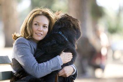 Must Love Dogs - Foto 1