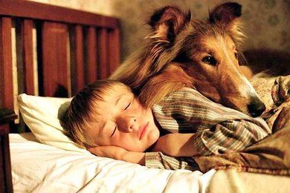Lassie - Foto 2