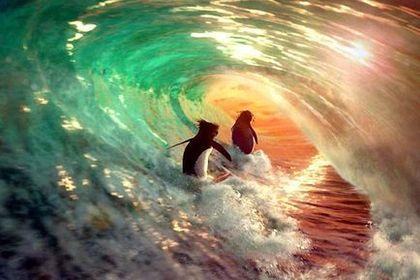 Surf's Up - Foto 1