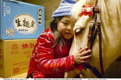 Het Paard van Sinterklaas - Foto 2