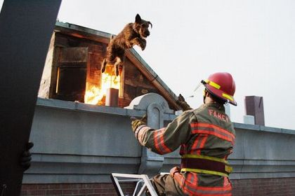 Firehouse Dog - Foto 3