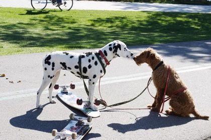 Firehouse Dog - Foto 4