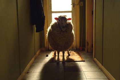 Black Sheep - Foto 1