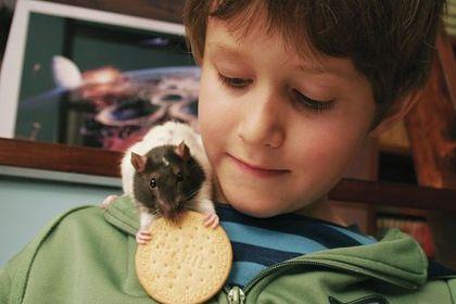 Sven en Zijn Rat en het UFO Mysterie - Foto 3