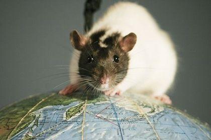 Sven en Zijn Rat en het UFO Mysterie - Foto 4