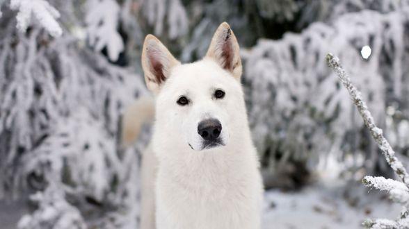 Arrêtez d'acheter des huskies, demande un acteur de Game of Thrones - Actu